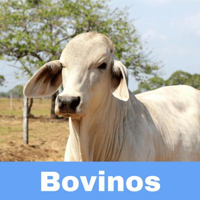 Antibióticos para Bovinos