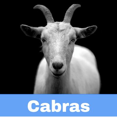 Antibióticos para Cabras