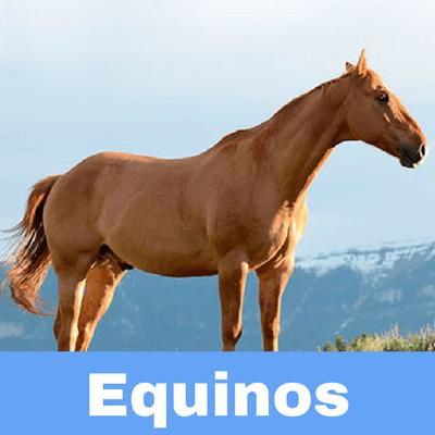 Antibióticos para Equinos