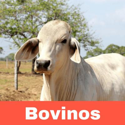 Antiparasitarios para Bovinos