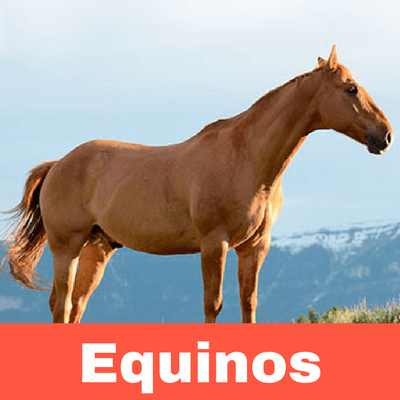 Antiparasitarios para Equinos