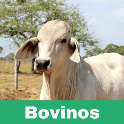 Reconstituyentes para Bovinos