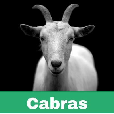 Reconstituyentes para Cabras