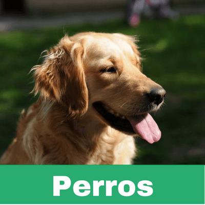 Reconstituyentes para Perros