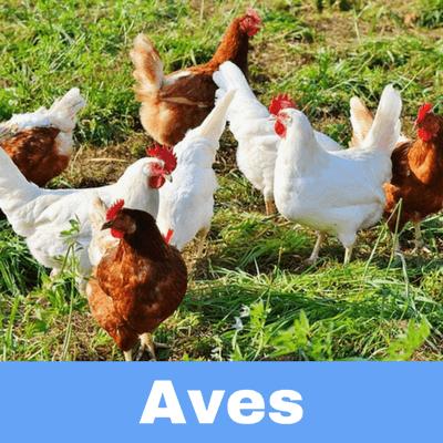 Antibióticos para Aves