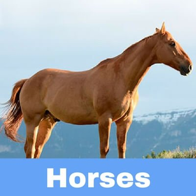Antibiotics for Horses