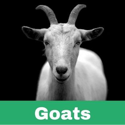 Restoratives drugs for Goats