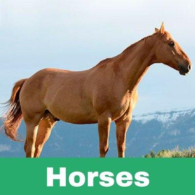 Restoratives drugs for horses